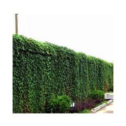 定西垂直绿化设计,甘肃欣绿源园林景观工程