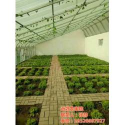 农家院、津南农家院出售、近郊农家院(优质