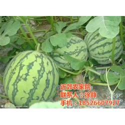 近郊农家院(图),武清特价农家院出售,农家院