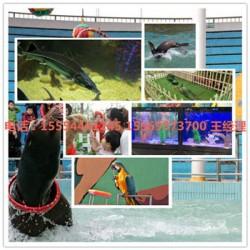 连云港市租赁海狮表演精彩海狮表演