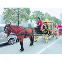 马车出租公司在哪里旅游观光马车价格马车在