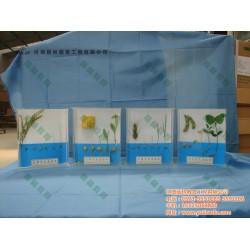 褐藻类植物保色浸制标本,标本,雨林教育