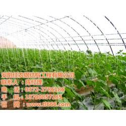 蔬菜温室|佳农大棚|蔬菜温室大棚多少钱