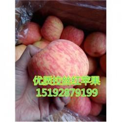 今 日 预 测 山东红富士苹果通货怎么样