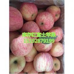 今 日 山东万亩红富士苹果偏红全 国 销售点