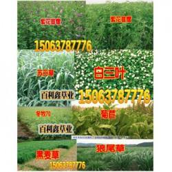 水草种子怎样萌芽草坪种子是直接撒的吗