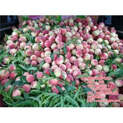 桃树苗种植说明、荆门桃树苗、枣阳桃花岛