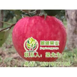 陕西洛川苹果,景盛果业,陕西洛川苹果礼盒