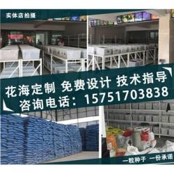 荞麦种子丨江苏春百宝种业