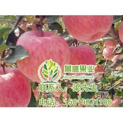 洛川苹果|洛川苹果礼盒|景盛果业(优质商家)