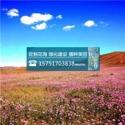 糖蜜草种子丨江苏春百宝种业