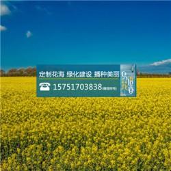 婆婆纳种子丨江苏春百宝种业