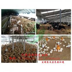 发酵床养鸡用欣圣源发酵床怎么购买