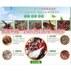 保亭淡水龙虾苗批发价格—种虾厂家出售价格