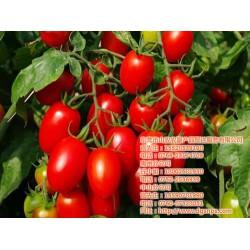山农农副产品配送(图),东莞送菜公司的价格,