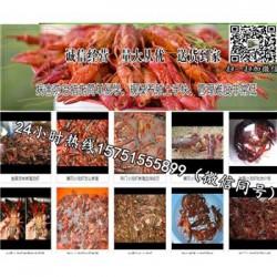 茂名市龙虾种苗供应¥哪里有龙虾苗