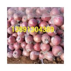 陕西红富士苹果价格膜袋苹果产地纸加膜红富士苹果基地产地