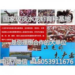 古交哪里有品种好的虾苗卖—淡水龙虾养殖技