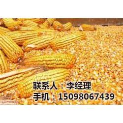 饲料玉米|荆门市玉米|颜杨水产(查看)