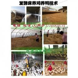 发酵床技术养羊怎么制做的选什么牌子菌种