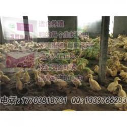 发酵床养鸡哪家菌种质量好 零售价是多少